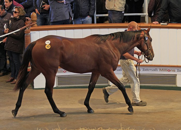 Perpared for sale at Mildmay Farm and Stud